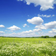 Meadow - Stockfoto