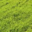 Green lawn — Stock Photo #4793141