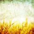 Grunge wheat - Stok fotoraf