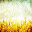 Grunge wheat - Stockfoto