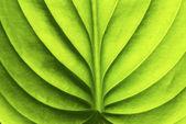 фон листа — Стоковое фото