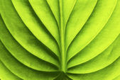 Leaf background — Photo