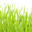 Lawn on white — Stockfoto