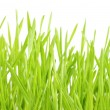 Lawn on white — Stock Photo