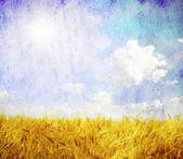 Grunge wheat field — Stock Photo
