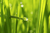 Drop on grass — Foto de Stock