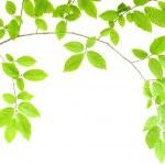 Green plant — Stock Photo #5020180