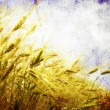 Wheat  field — Stockfoto
