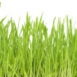 Lawn on white — Stock Photo #5127627