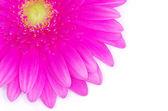 Roze gerbera bloem — Stockfoto