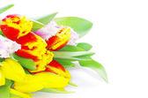 在白色的郁金香 — 图库照片