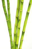 Bambú verde — Foto de Stock
