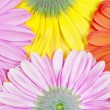 Royalty-Free Stock Photo: Gerberas background