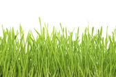 Lawn on white — Stock Photo