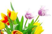 Tulipany na biały — Zdjęcie stockowe