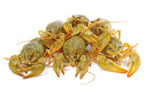 Crawfish — Foto de Stock