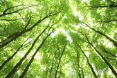 árvores verdes — Foto Stock