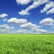 Field background - Stockfoto