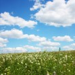 Stock Photo: Beautifully summer landscape