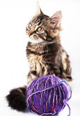 Kitten and a ball of thread — Stock Photo