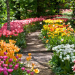 Path in a garden among tulips — Stock Photo