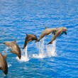 Dolphins jumping out of the water — Stock Photo #4055522