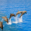 Dolphins jumping out of the water - Stock Photo