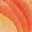 Yellow-red dry autumn leaves — Stock Photo