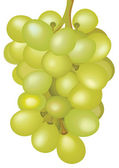 Bunch of grapes. — Stock Photo