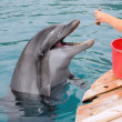 Stock Photo: Feeding Dolphins