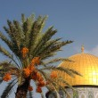 Dome of the Rock Mosque and Palm Tree — Stock Photo