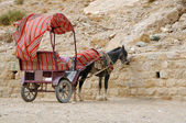 Donkey and Cart at Petra — Stock Photo
