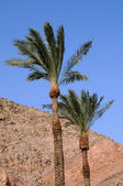 Palms on the Wind — Stock Photo