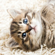 Funny kitten in carpet — Stock Photo