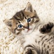 Stock Photo: Funny kitten in carpet