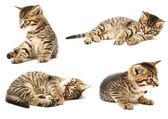 Zabawny kotek — Zdjęcie stockowe