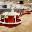 Stock Photo: Automated poultry farm