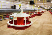 Automated poultry farm — Stock Photo