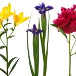 Beautiful fresh flowers — Stock Photo