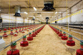 Poultry farm — Stock Photo