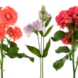 Beautiful fresh flowers — Stock Photo