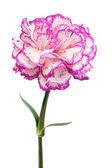 Beautiful pink flower — Stock Photo