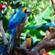 Group parrots — Stock Photo #5243585