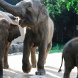 Three elephants - Foto Stock