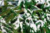 Tree covered with snow — Stock Photo