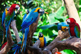 Group parrots — Stock Photo