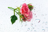 Rose on the mirror — Stock Photo