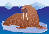 Walrus on ice floe — Vector de stock