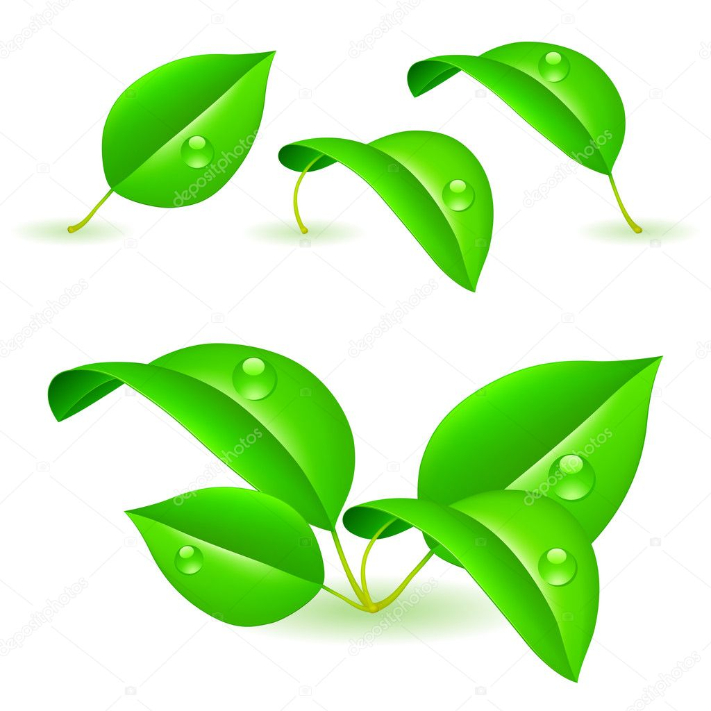 Set of green leaves covered with water drops. — Stock Vector #4507946