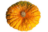 Colourful pumpkin isolated on white background. — Stock Photo